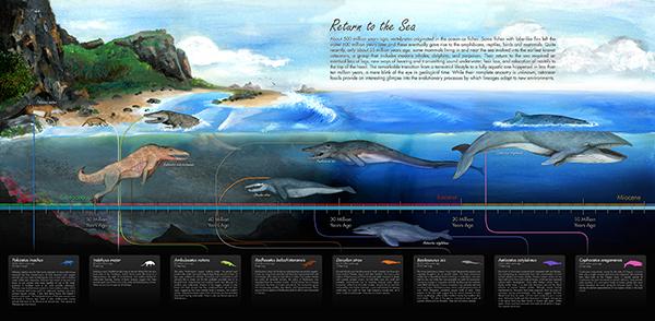 WhaleAncestryMural1